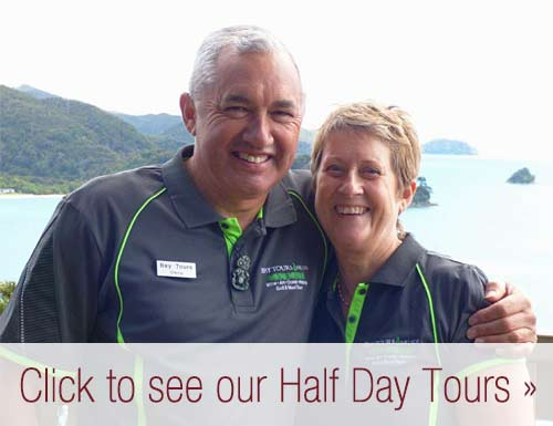 Nelson Half Day Tours